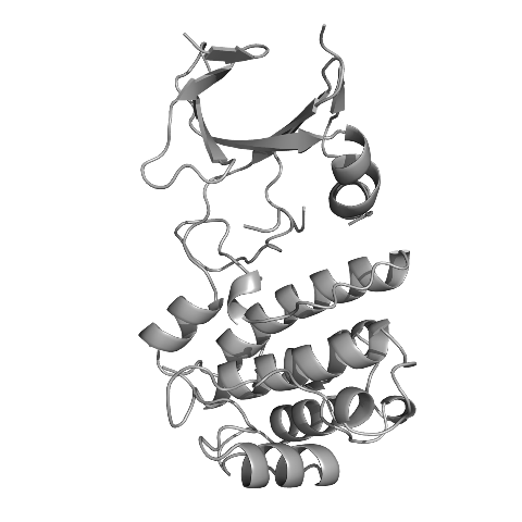 Image of the Trib1 protein - Credit Dr James Murphy Walter and Eliza Hall Institute.